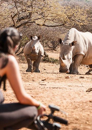 rhino-tracking-mokolodi